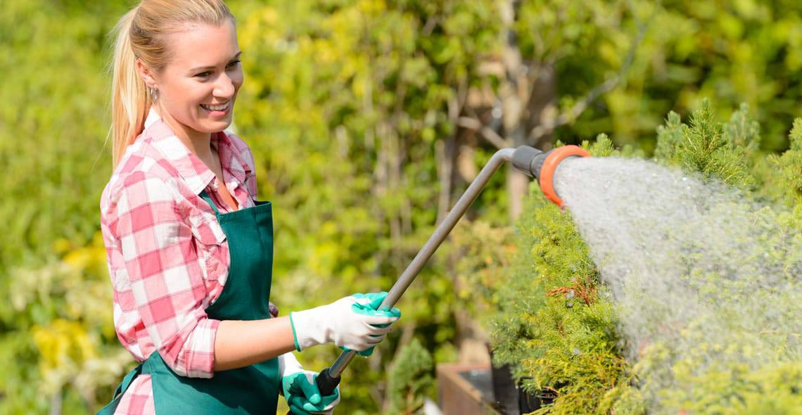 What are the Basics of Lawn Fertilization