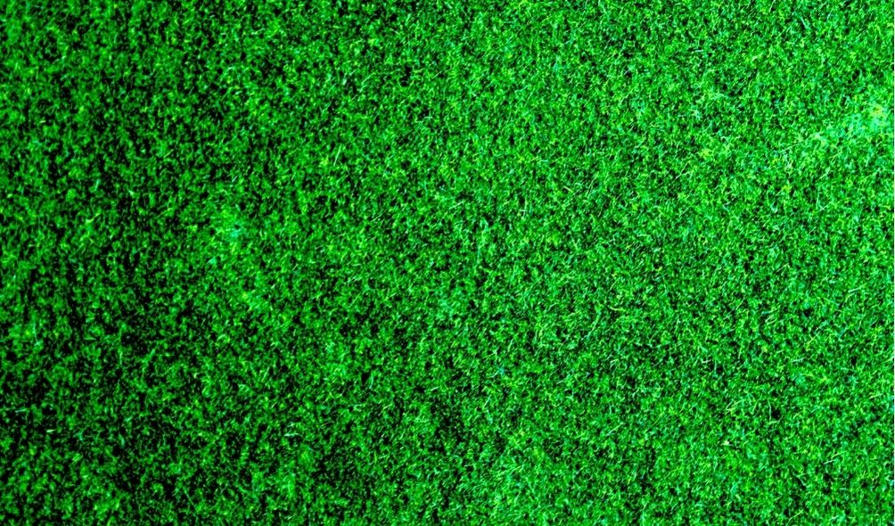 When Should You Topdress Your Lawn