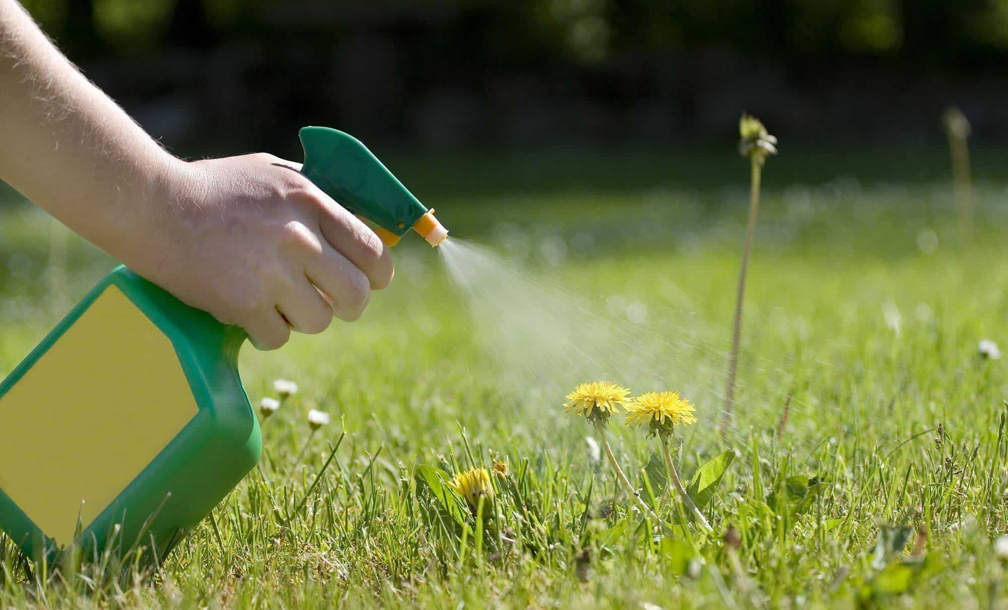 How To Kill Weeds With Homemade Weed Killer and Other Natural Methods