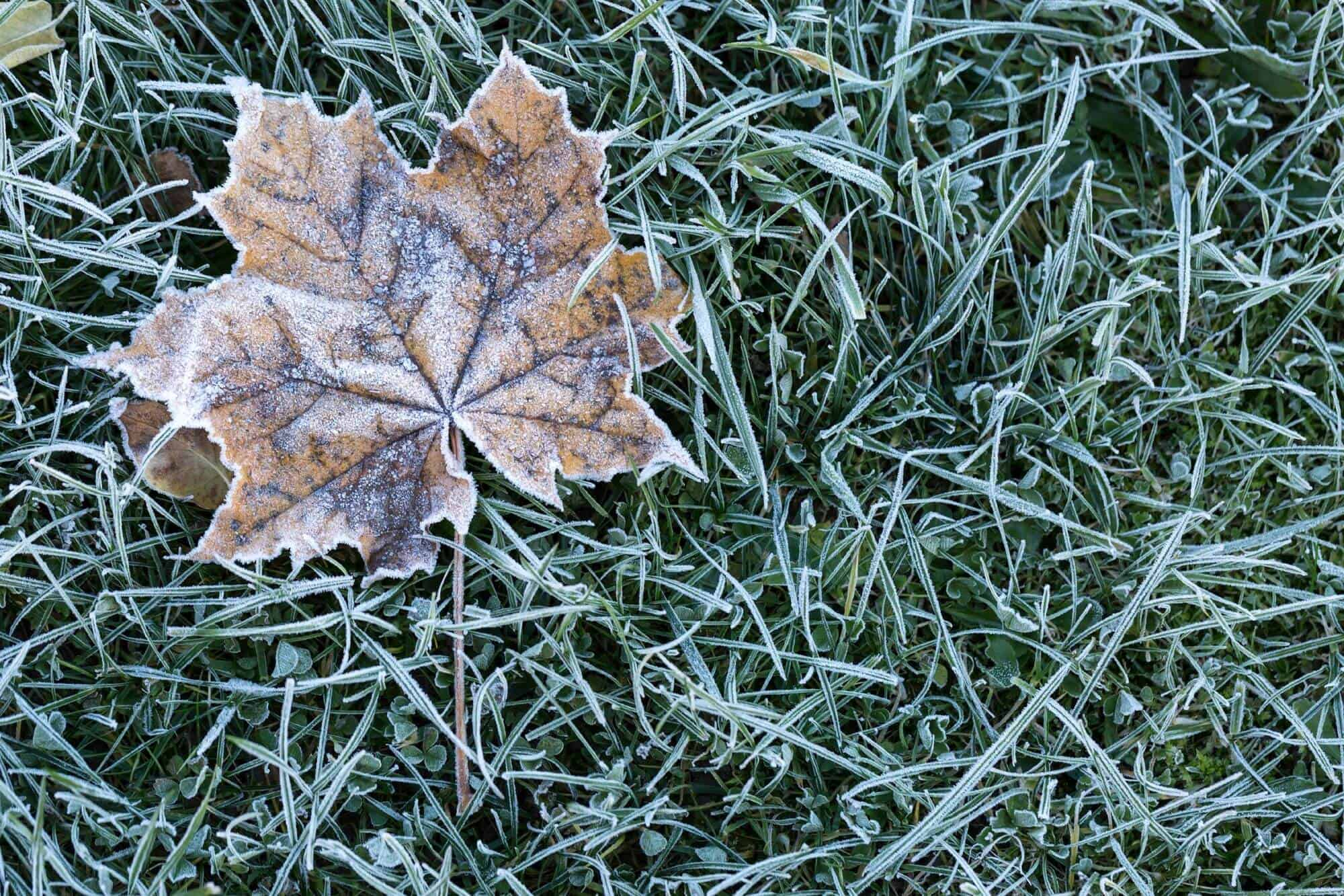 Winter Warrior – 6 Tips To Help Your Yard Survive The Snowy Seasons