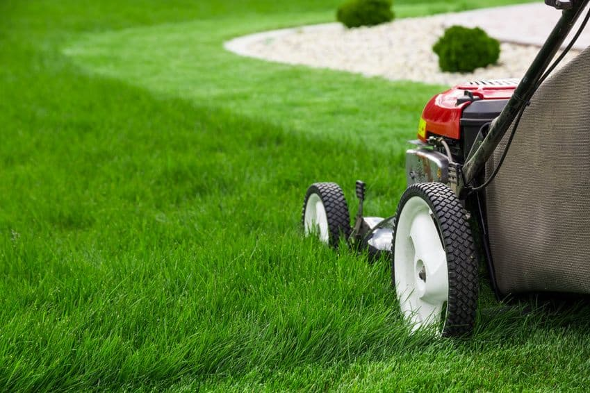 How to Give your Neighbours Lawn Envy