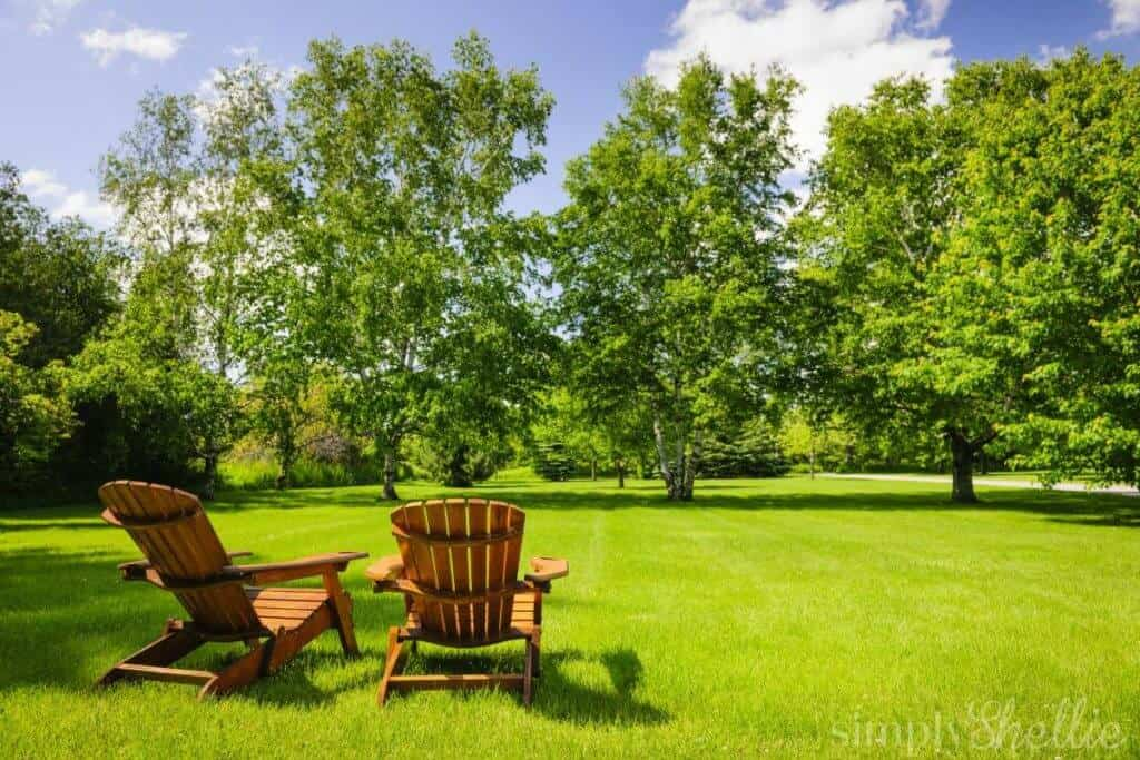 Summer Yard To-Do List for Toronto Homeowners