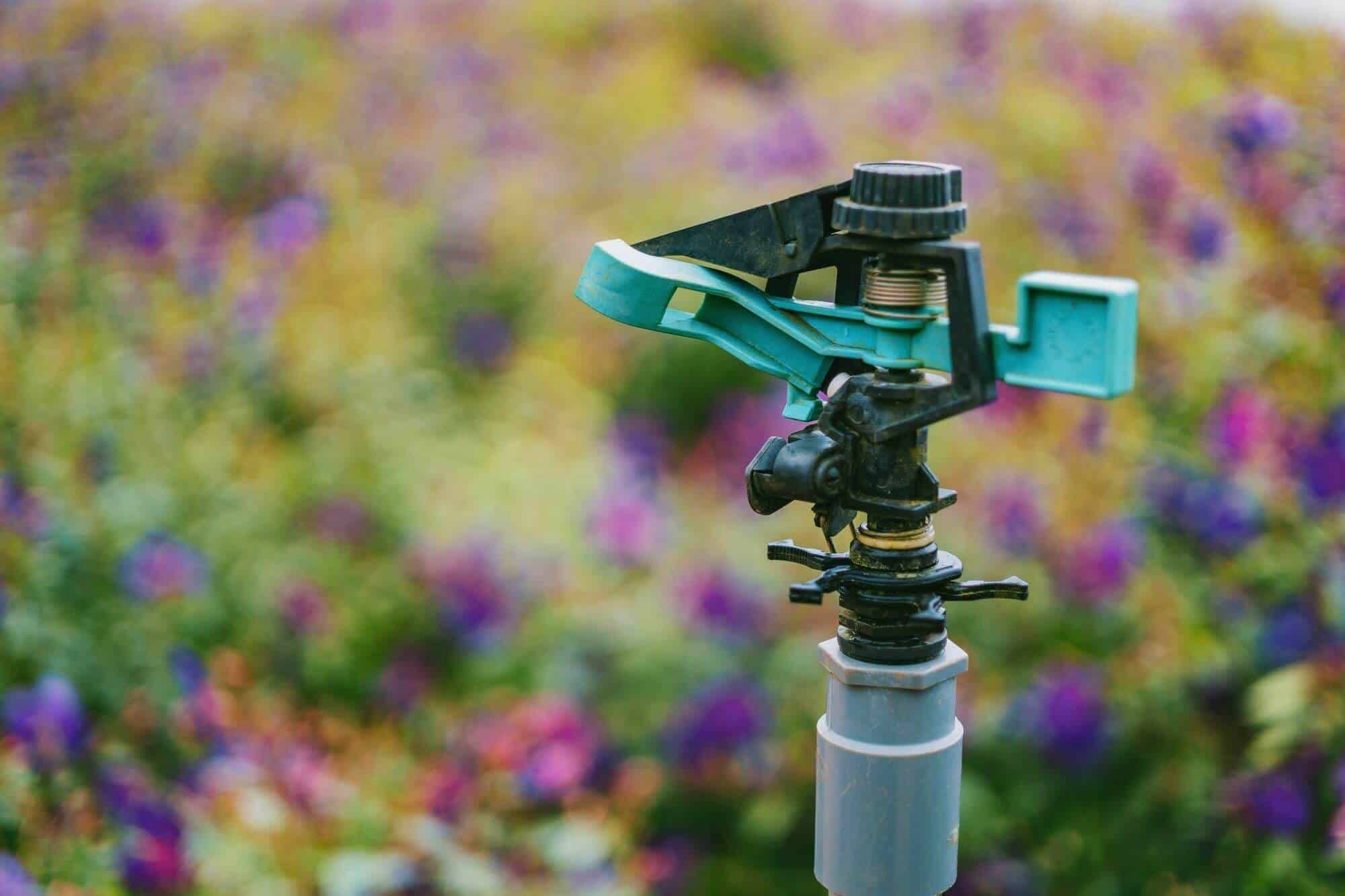 The Ideal Watering Schedule for Your Home