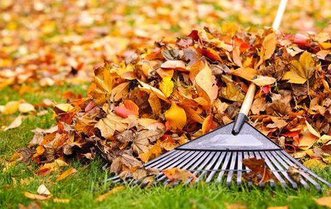 Why Fall Lawn Care Is So Important