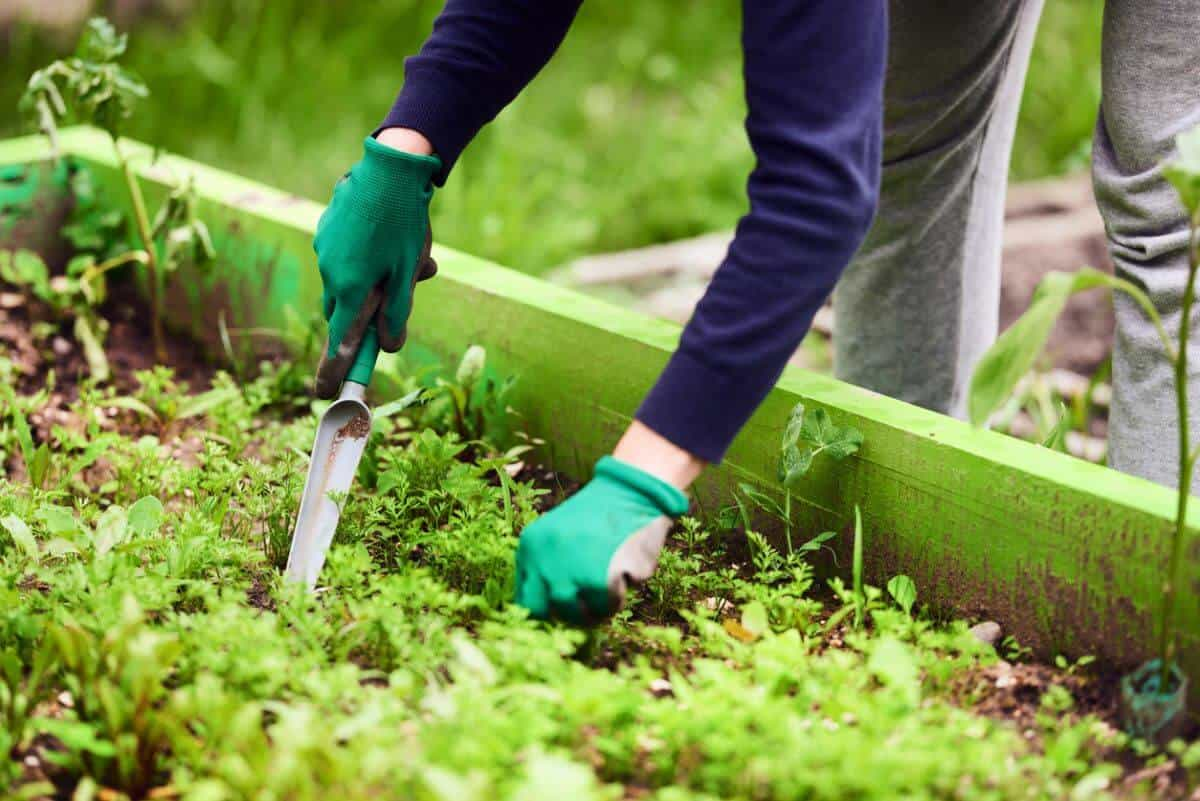 Organic Weed Control For Flower Beds