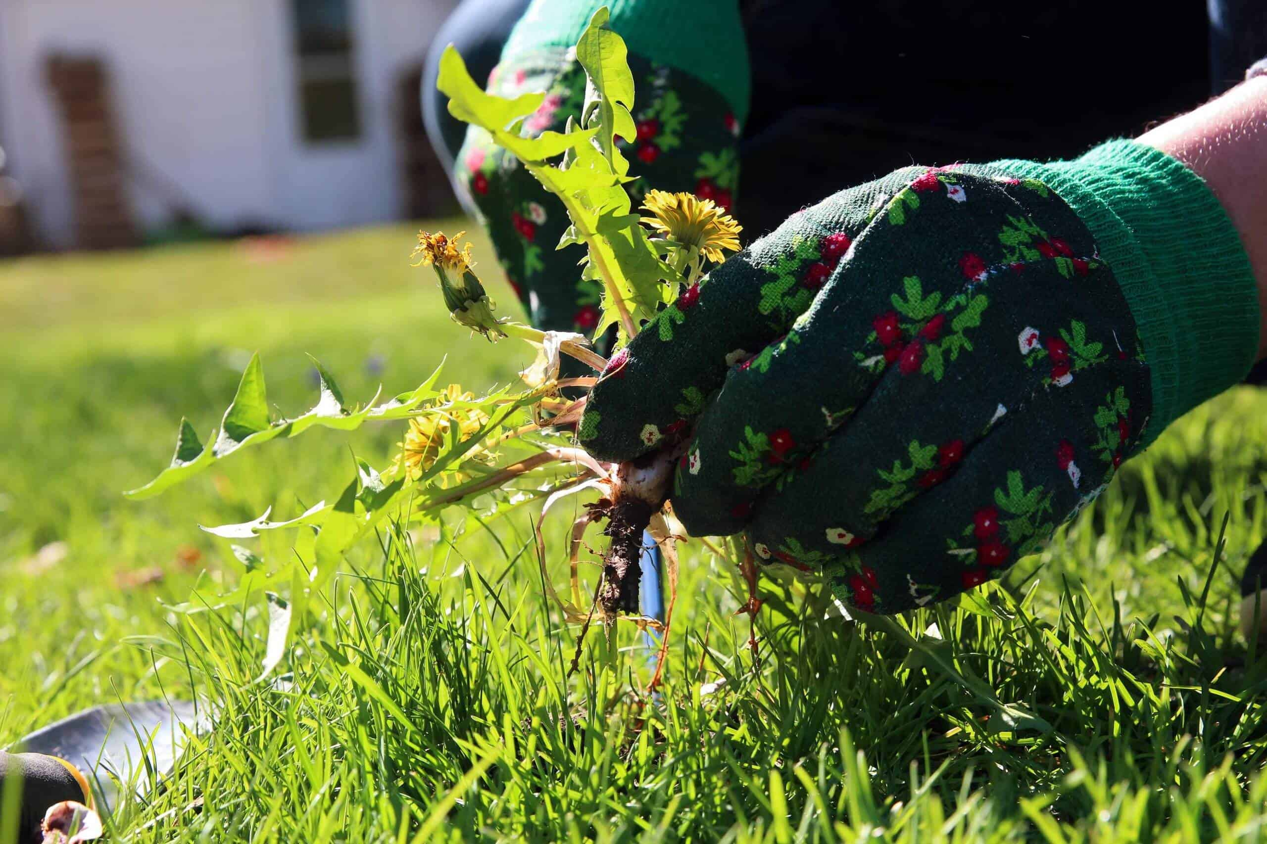 What Are the Most Suitable Weed Control Methods?