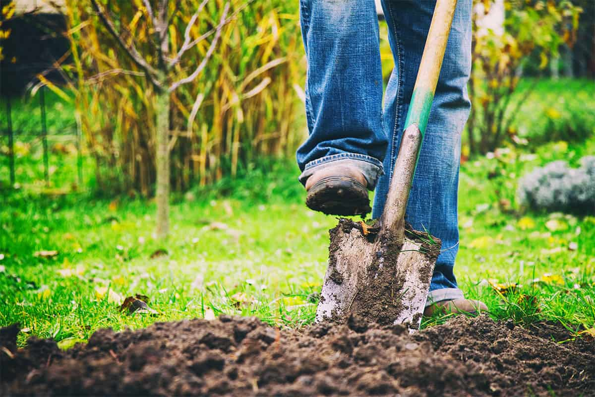 What Are the Different Types of Garden Shovels?