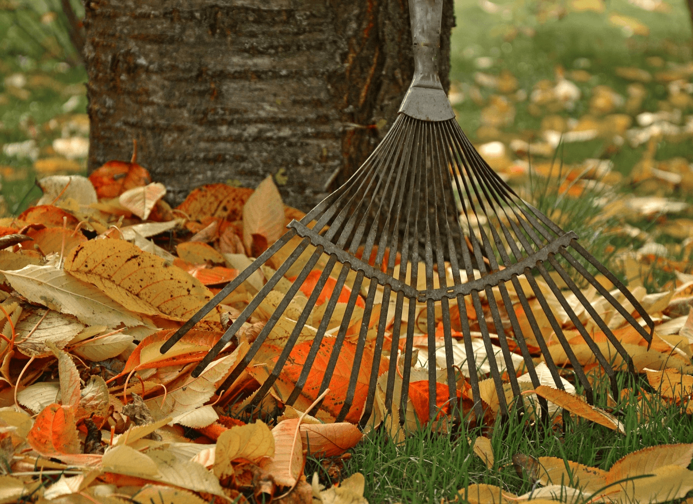 The Best Leaf Raking Hacks for Chicago Homeowners