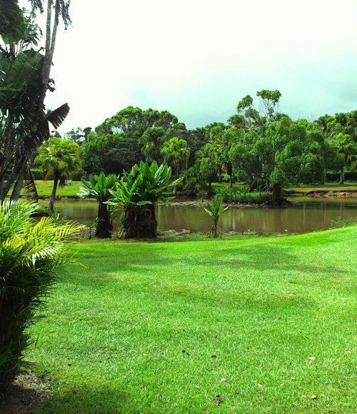 Green lawn in garden