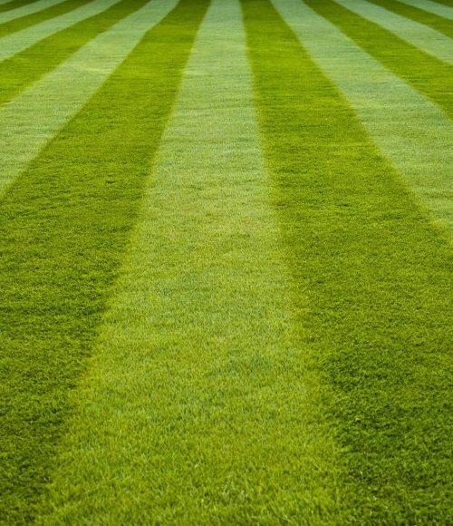Garden lawn mowing