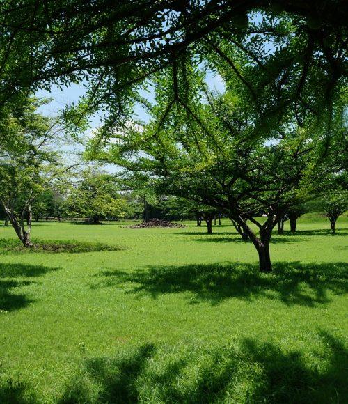 Landscaping services | Eden