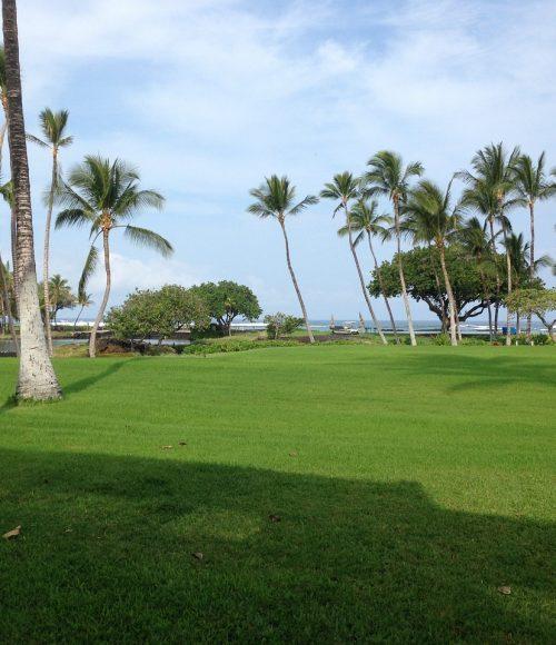 palm trees miami