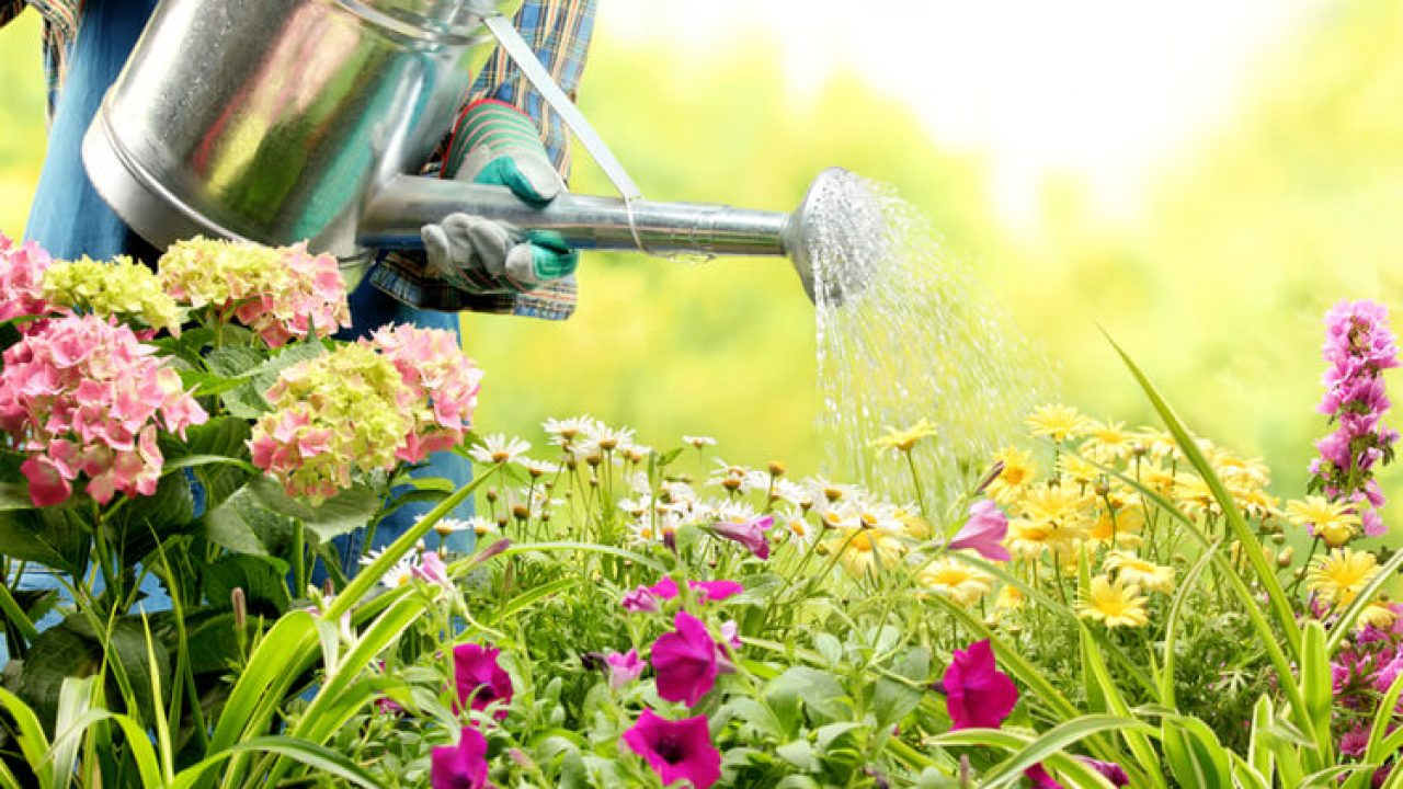 How to Select Water Efficient Plants in Hamilton, ON