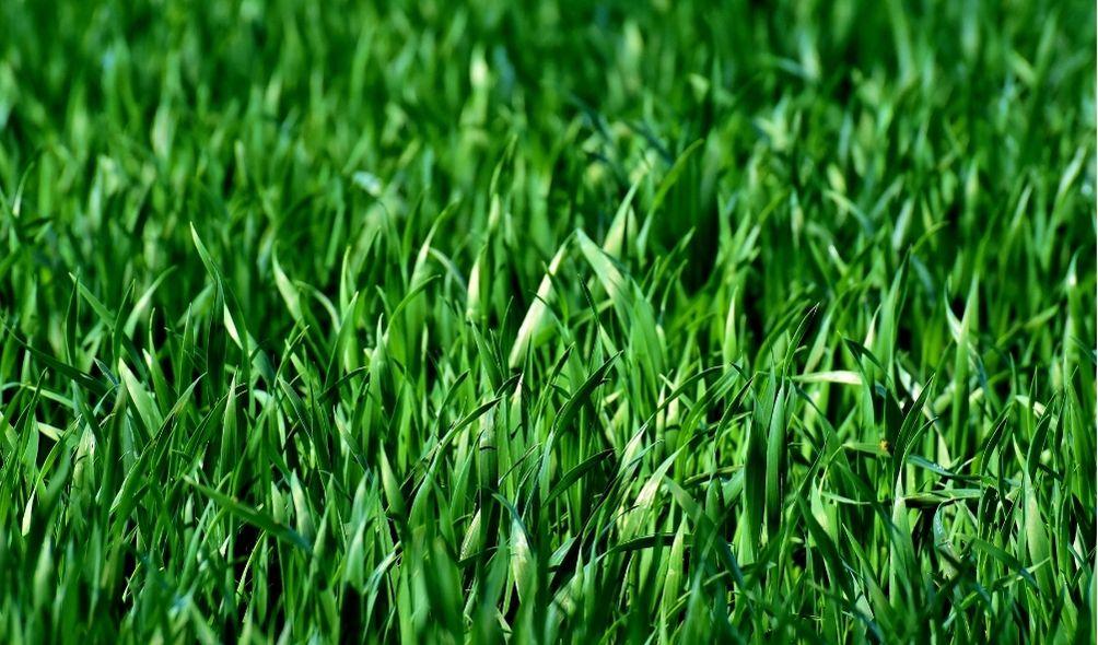 Lawn Care Services | Eden