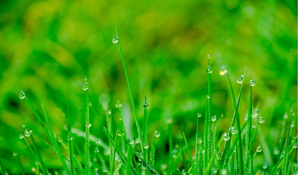What is the best way to take care of your lawn?