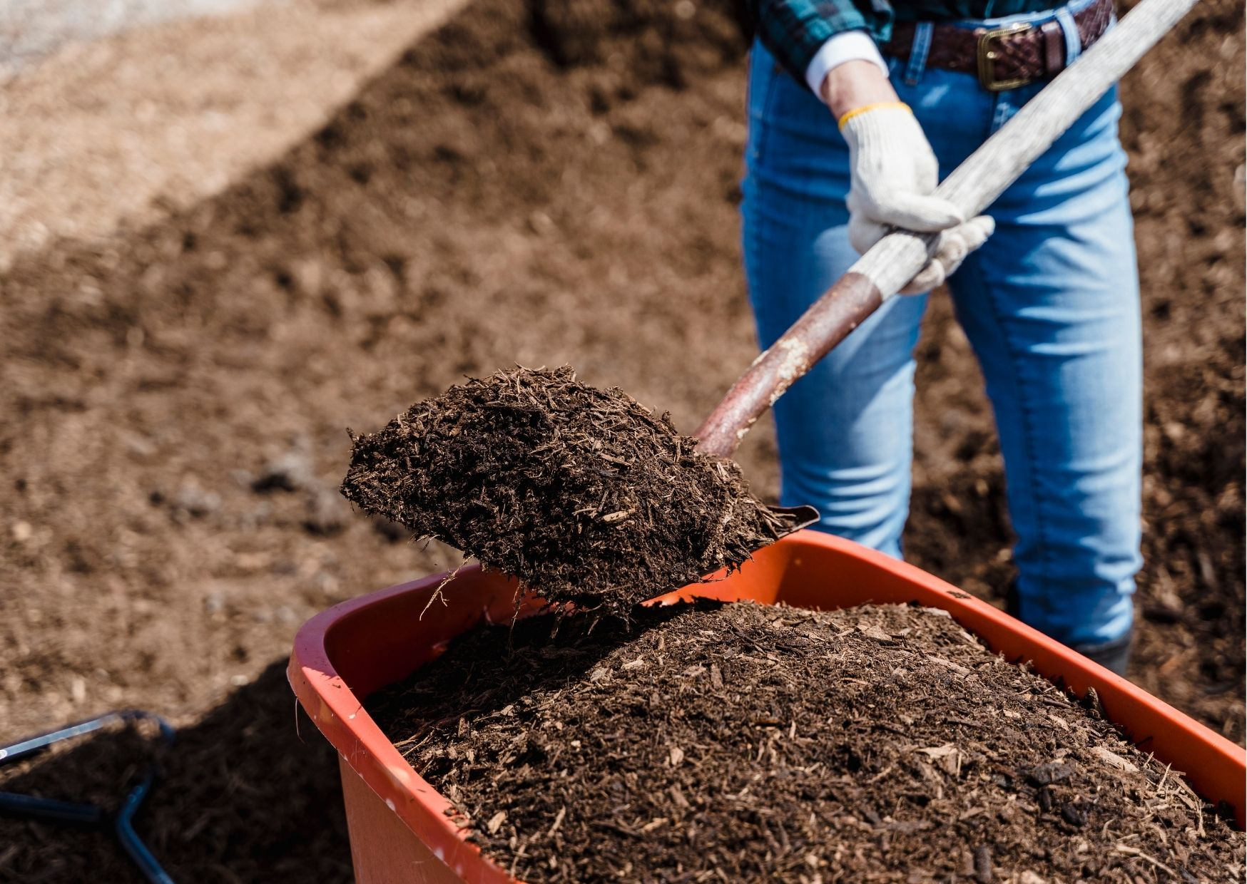 How to Top Dress Your Lawn with Compost?