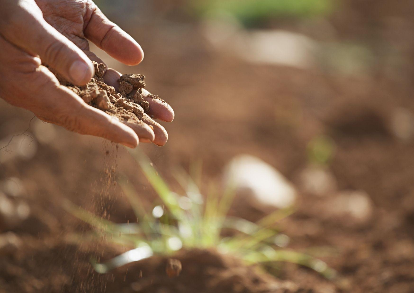 Soil testing for topdressing lawn