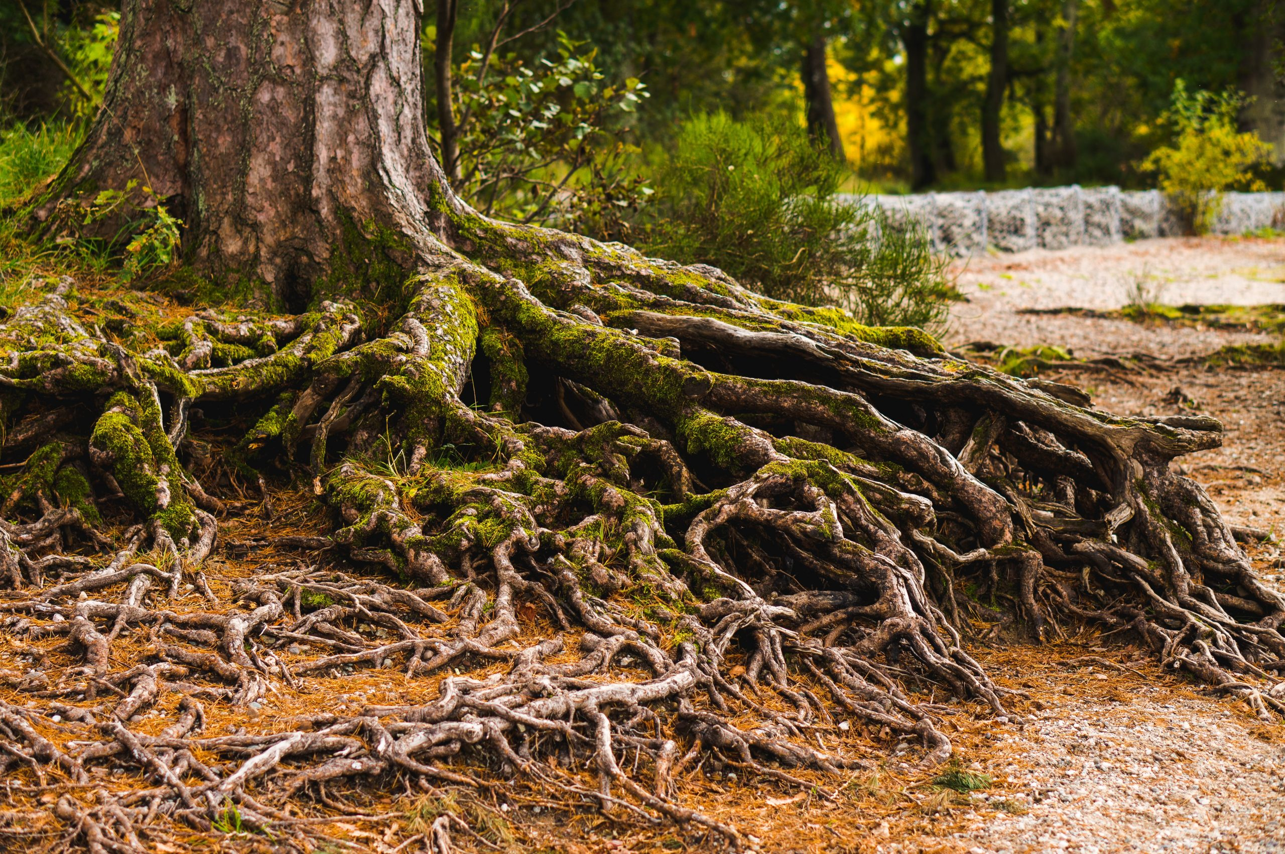 Tree Root Removal Guide