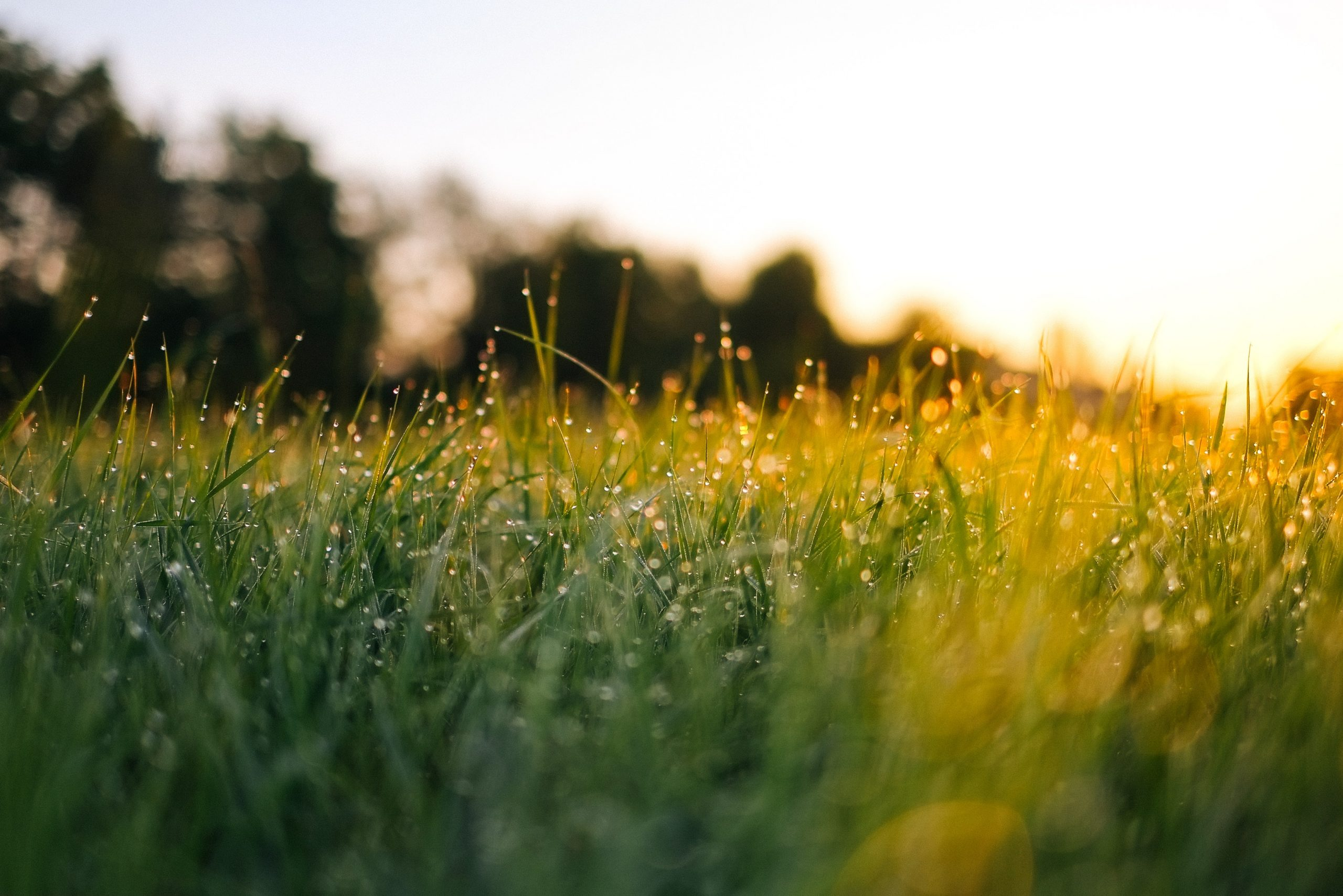 Ground temperature for your lawn